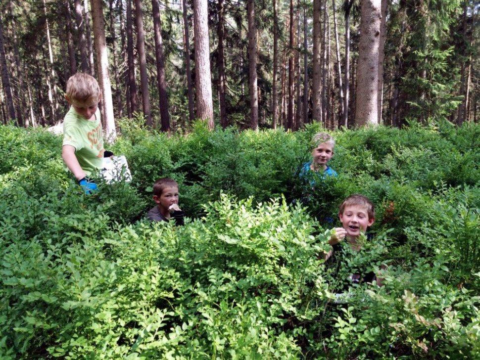 letní dětský tábor 2020 vlese naborůvkách